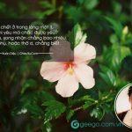 Nhà thơ Xuân Diệu cùng những bài thơ tình buồn cảm xúc