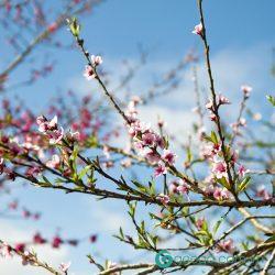 Những bài thơ 7 chữ về mùa Xuân ý nghĩa và nhiều cảm xúc