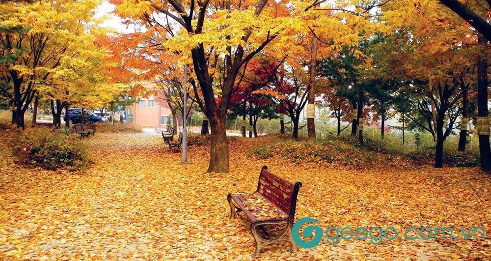 Những bài thơ về mùa thu để lại dấu ấn đi cùng tháng năm