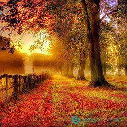 Những bài thơ về mùa thu nổi tiếng đi cùng năm tháng